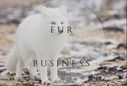Mind your own fur business